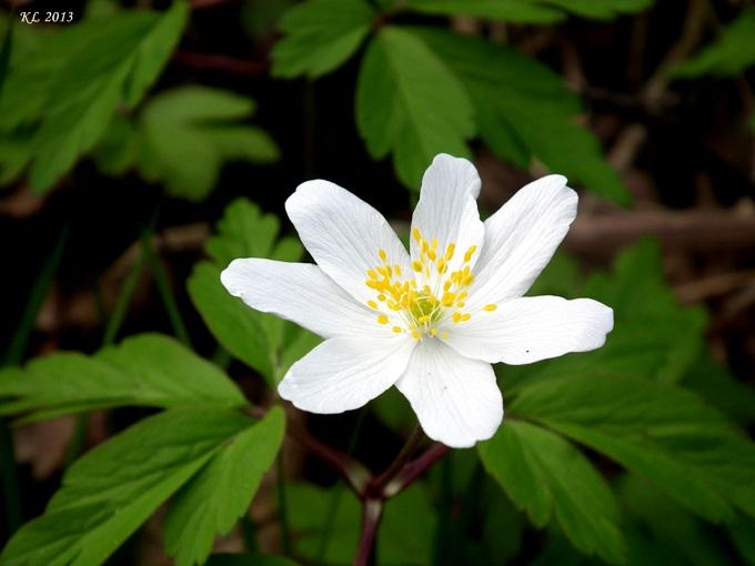 Blüte02