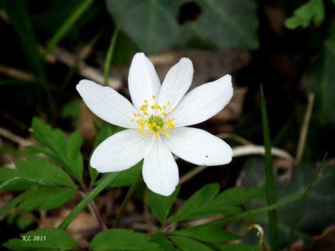 Blüte03