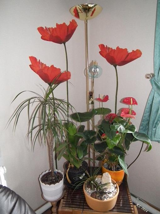 Blumen 01