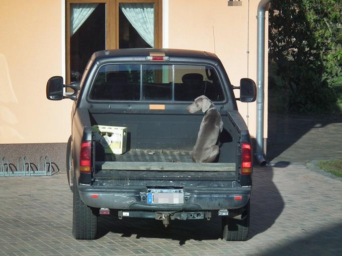 Hund 03