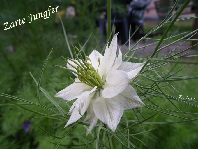 Träumerle » Gartenblumen