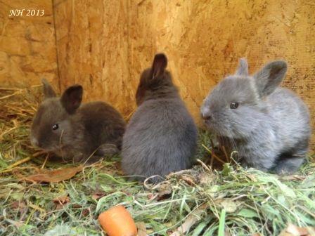 Kaninchen01