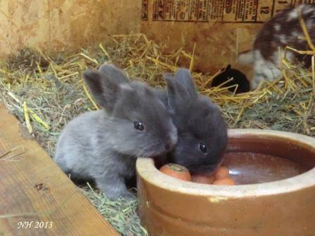 Kaninchen02