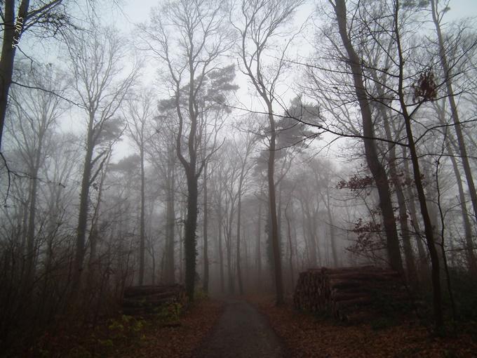Nebel 05