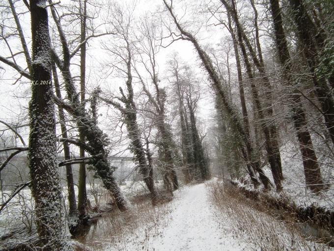 Schnee-Aue 01