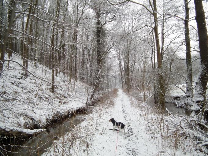 Schnee-Aue 02
