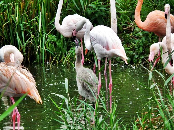Vogelpark 01