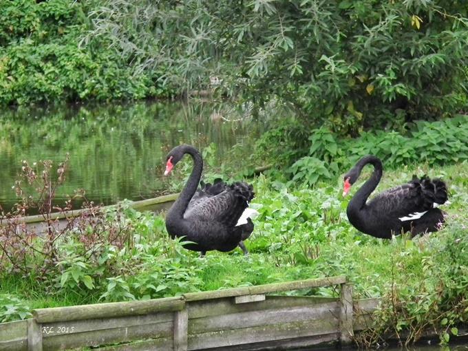 Vogelpark 02