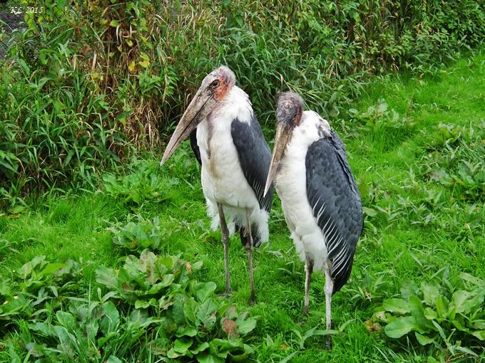Vogelpark 03