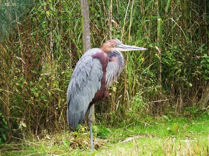 Vogelpark 04