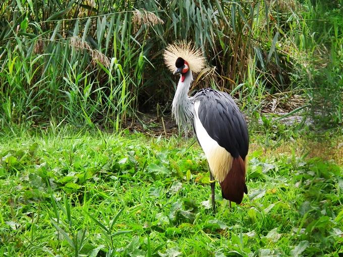 Vogelpark 06