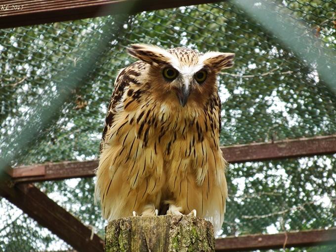 Vogelpark 07